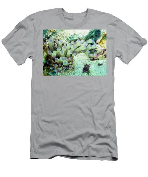 Sea Anemone With Squat Anemone Shrimp Family Men's T-Shirt (Slim Fit) by Amy McDaniel