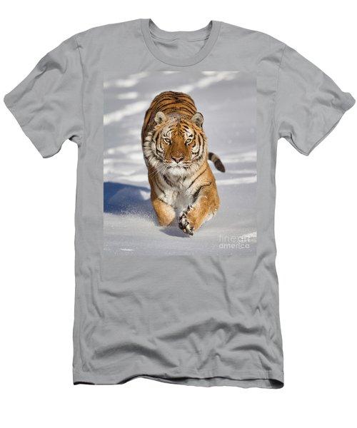 Siberian Tiger Coming Forward Men's T-Shirt (Athletic Fit)