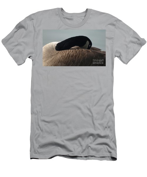 Sleeping Canada Goose Men's T-Shirt (Athletic Fit)