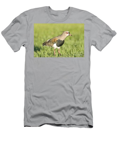 Southern Lapwing Men's T-Shirt (Athletic Fit)