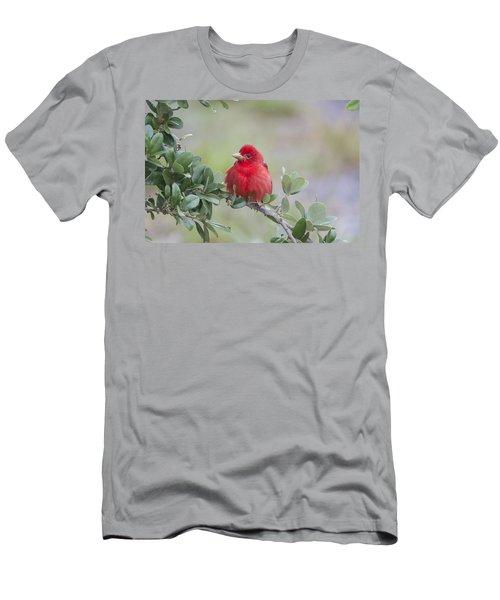 Spring Beauty Men's T-Shirt (Slim Fit) by Doug Lloyd