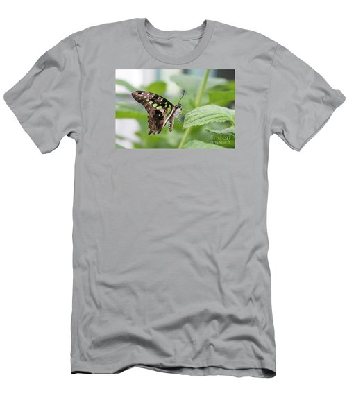 Tailed Jay Butterfly #3 Men's T-Shirt (Slim Fit)