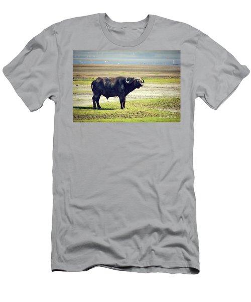 The African Buffalo. Ngorongoro In Tanzania. Men's T-Shirt (Athletic Fit)