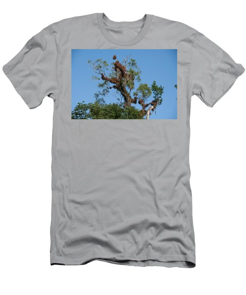 Tikal Furry Tree Men's T-Shirt (Athletic Fit)