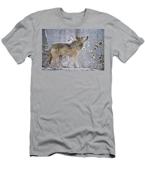 Timber Wolf Pictures 188 Men's T-Shirt (Athletic Fit)