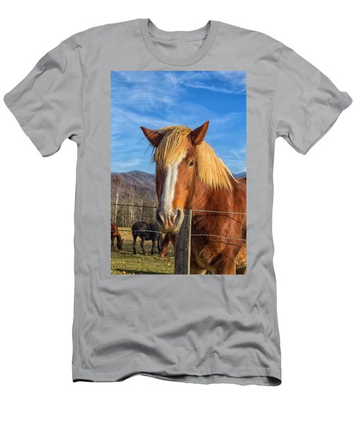 Wild Horse At Cades Cove In The Great Smoky Mountains National Park Men's T-Shirt (Athletic Fit)