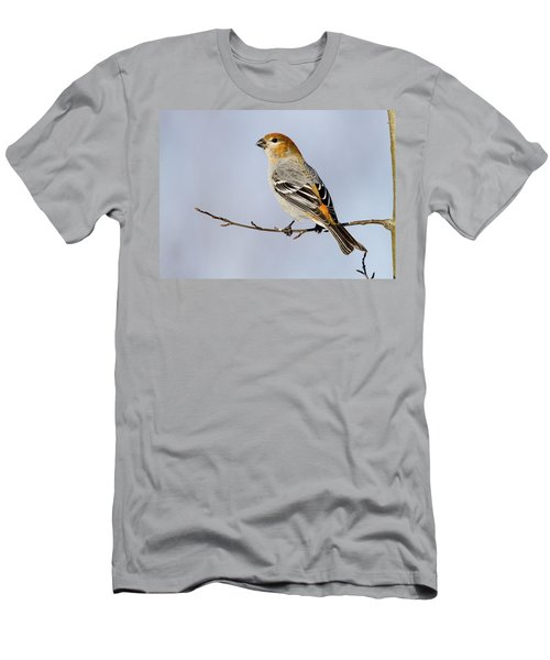 Female Pine Grosbeak Men's T-Shirt (Athletic Fit)