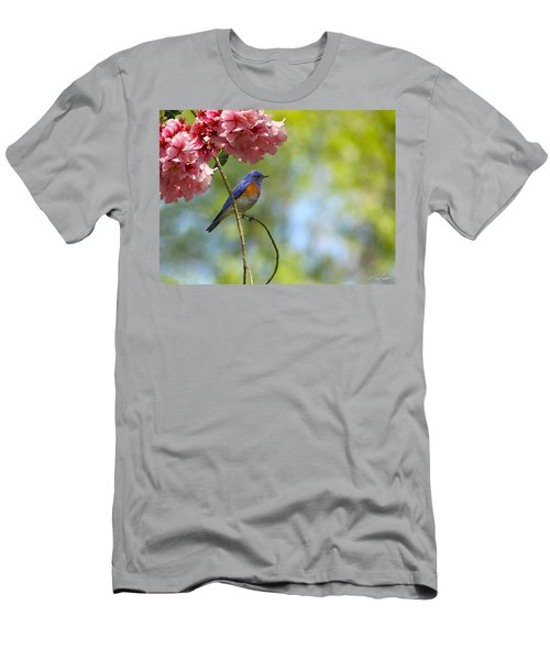 Bluebird In Cherry Tree Men's T-Shirt (Athletic Fit)