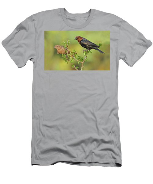 Brown Headed Cowbird Pair Men's T-Shirt (Athletic Fit)