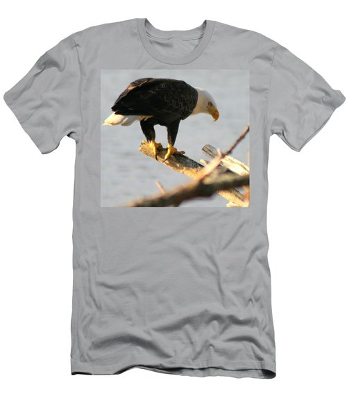 Eagle On His Perch Men's T-Shirt (Slim Fit) by Kym Backland