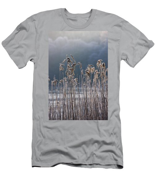 Frozen Reeds At The Shore Of A Lake Men's T-Shirt (Athletic Fit)