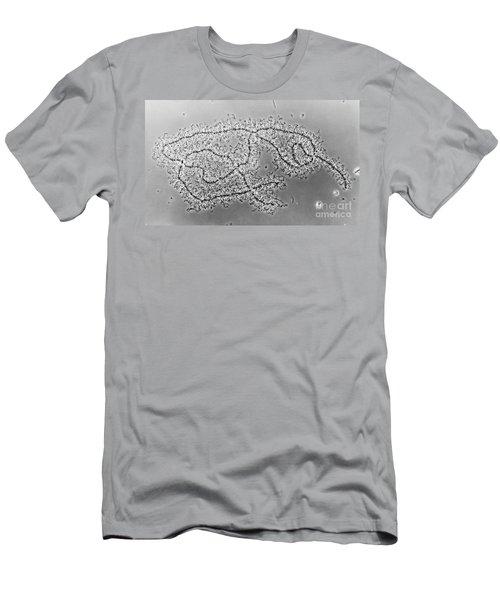 Lampbrush Chromosomes Newt, Lm Men's T-Shirt (Athletic Fit)