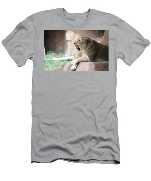 Lion At Brookfield Zoo In Chicago Il Men's T-Shirt (Athletic Fit)