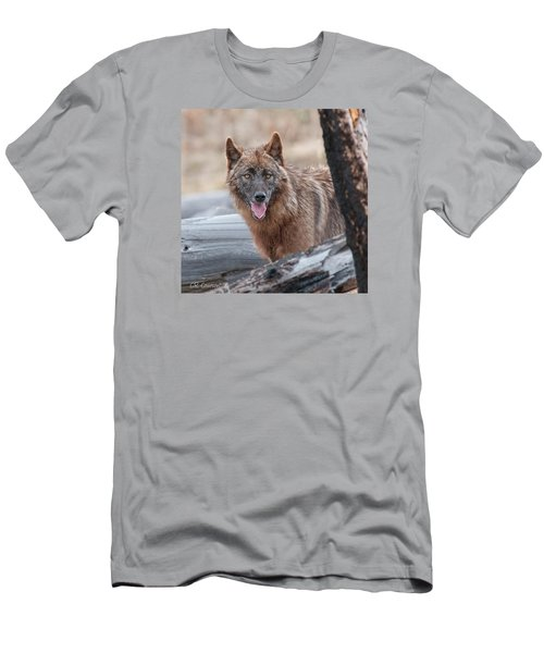 The Lone Wolf Men's T-Shirt (Slim Fit) by CR  Courson