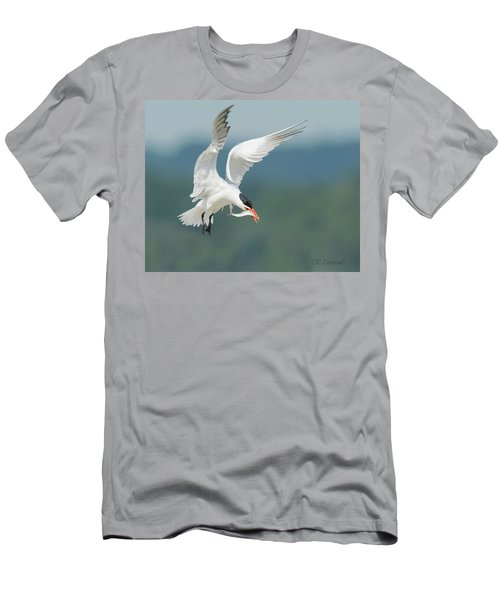 Caspian Tern With Fish Men's T-Shirt (Athletic Fit)