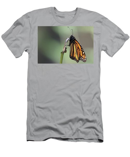 Monarch Butterfly Stony Brook New York Men's T-Shirt (Slim Fit) by Bob Savage