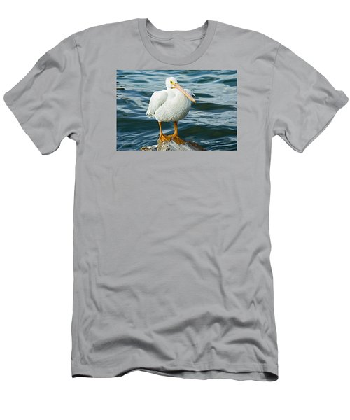 White Pelican Men's T-Shirt (Athletic Fit)