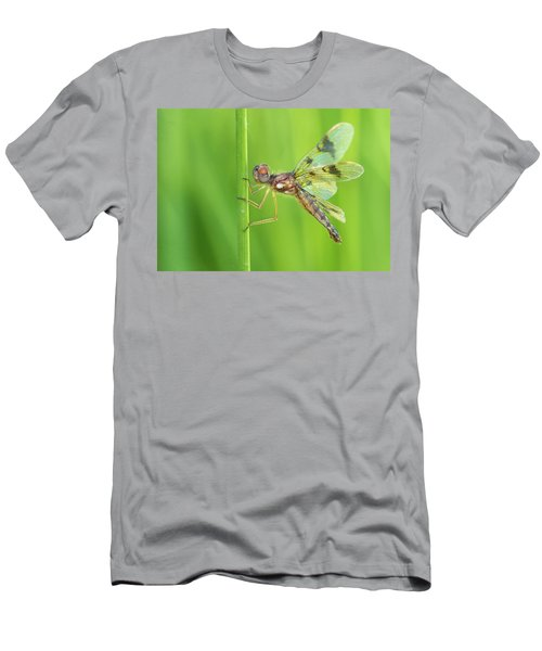 Eastern Amberwing Men's T-Shirt (Athletic Fit)