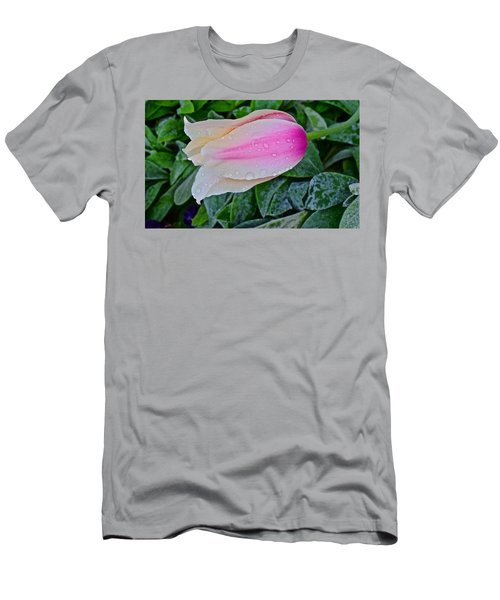 2015 Spring At Olbrich Gardens Lily Tulip In The Rain Men's T-Shirt (Athletic Fit)
