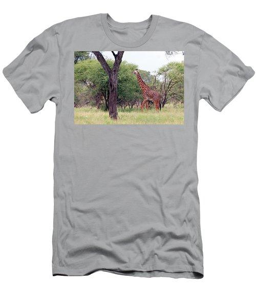 Giraffes Eating Acacia Trees Men's T-Shirt (Athletic Fit)
