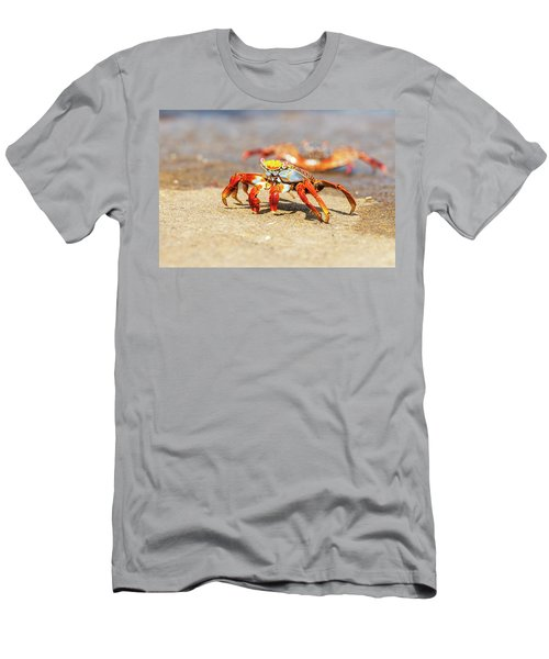 Sally Lightfoot Crab On Galapagos Islands Men's T-Shirt (Slim Fit) by Marek Poplawski