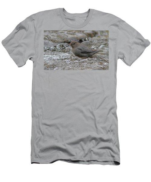 American Dipper Men's T-Shirt (Athletic Fit)