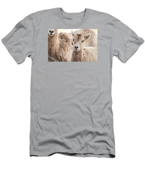Men's T-Shirt (Slim Fit) featuring the photograph A Little Lamb Cuteness by Yeates Photography