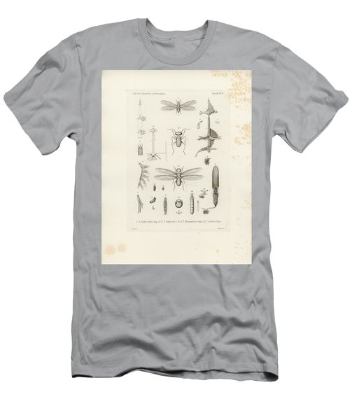 African Termites And Their Anatomy Men's T-Shirt (Slim Fit) by W Wagenschieber