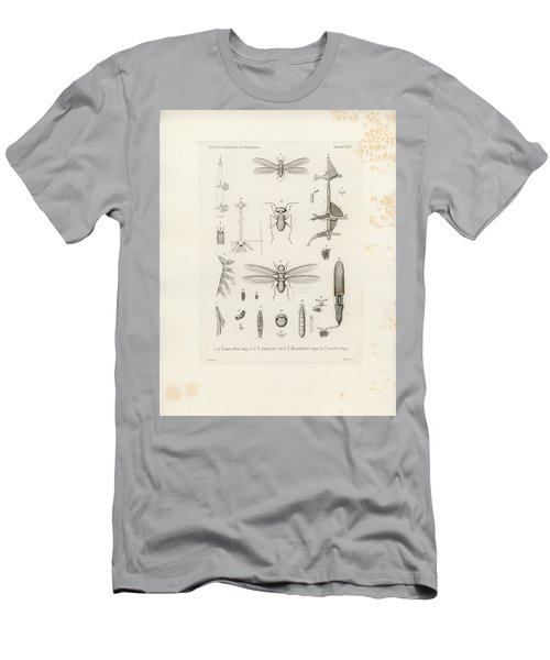 African Termites And Their Anatomy Men's T-Shirt (Athletic Fit)