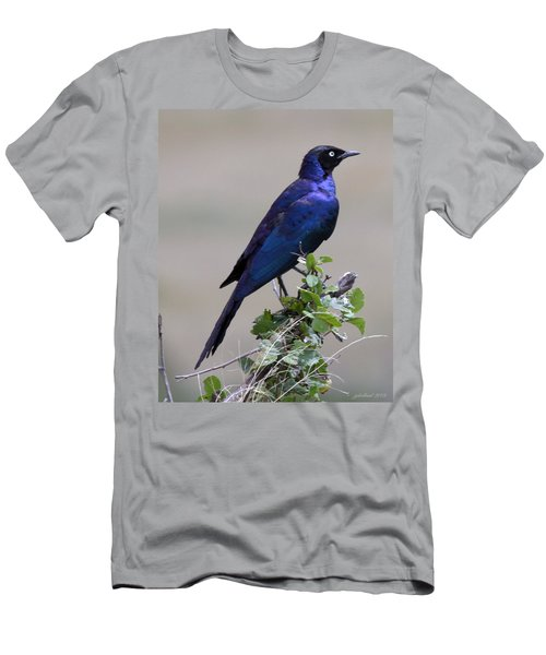 African White Eye Starling Men's T-Shirt (Athletic Fit)