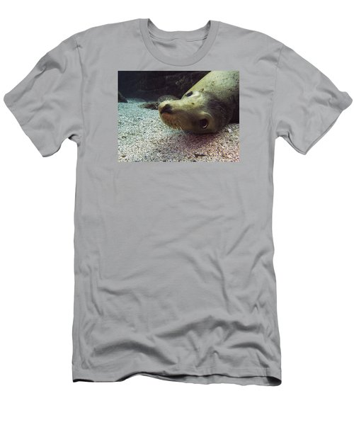 Am I Cute? Asks The Sea Lion Men's T-Shirt (Athletic Fit)