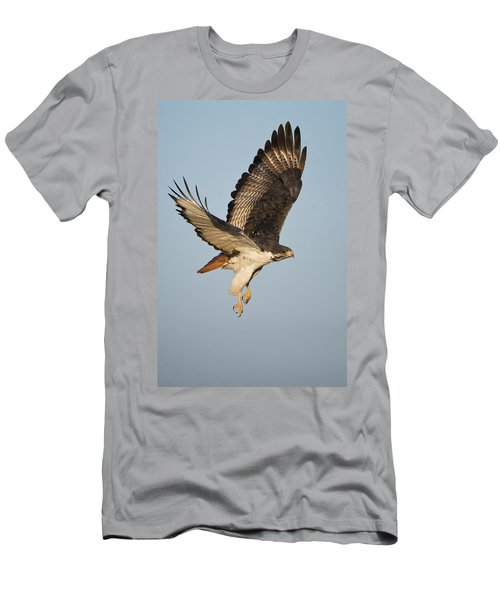 Augur Buzzard Buteo Augur Flying Men's T-Shirt (Slim Fit) by Panoramic Images
