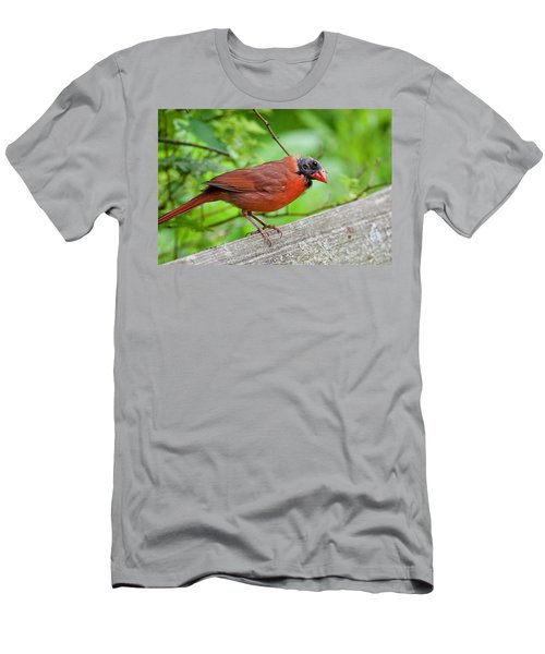 Bald Northern Cardinal Men's T-Shirt (Athletic Fit)