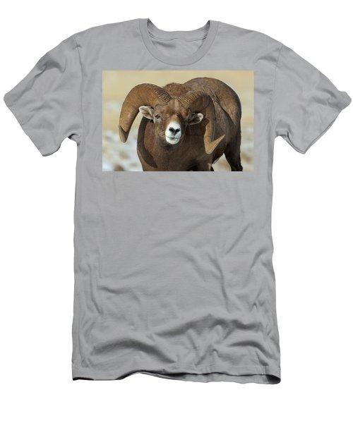 Bighorn Ram In Montana Men's T-Shirt (Athletic Fit)