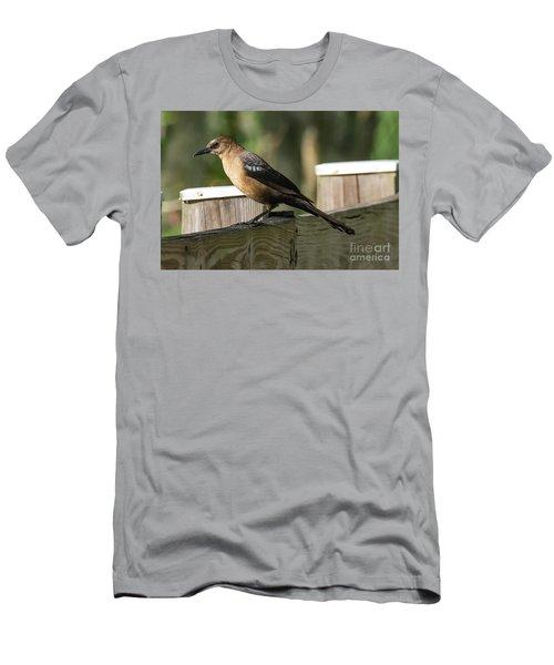 Grackle Men's T-Shirt (Athletic Fit)