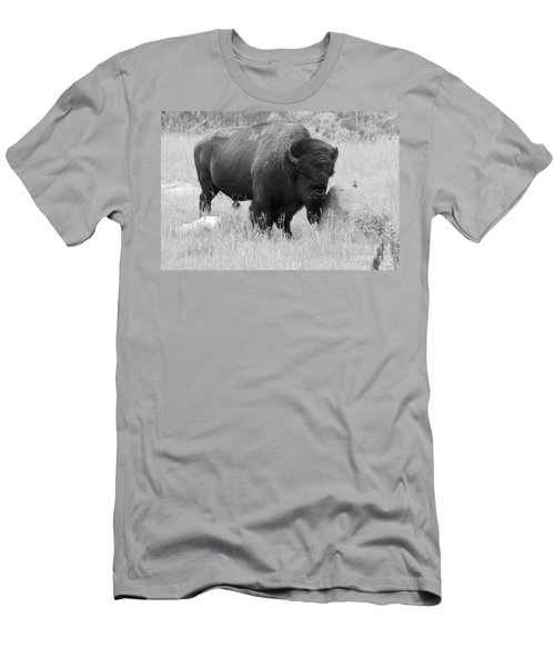 Bison And Buffalo Men's T-Shirt (Athletic Fit)