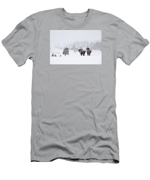 Bison In The Snow Men's T-Shirt (Slim Fit) by Gary Lengyel