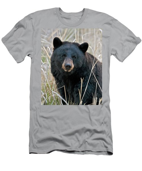 Black Bear Closeup Men's T-Shirt (Athletic Fit)