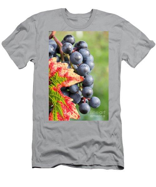 Black Grapes On The Vine Men's T-Shirt (Athletic Fit)
