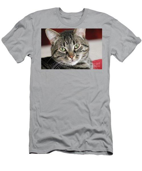 Black Tabby Men's T-Shirt (Athletic Fit)