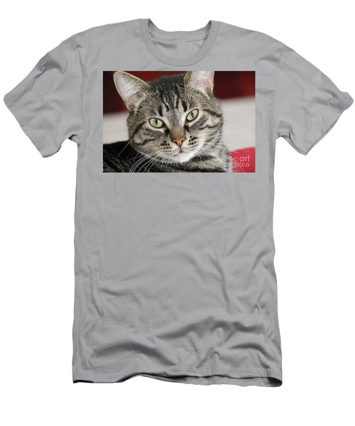 Black Tabby Men's T-Shirt (Athletic Fit)