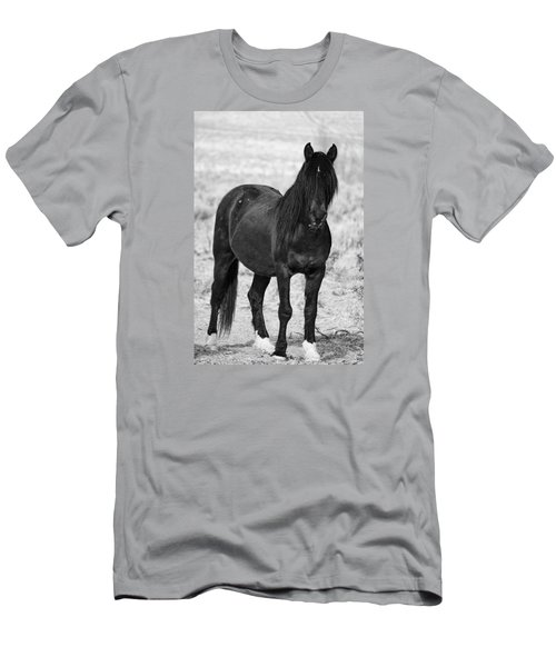 Black Wild Mustang Stallion Men's T-Shirt (Athletic Fit)