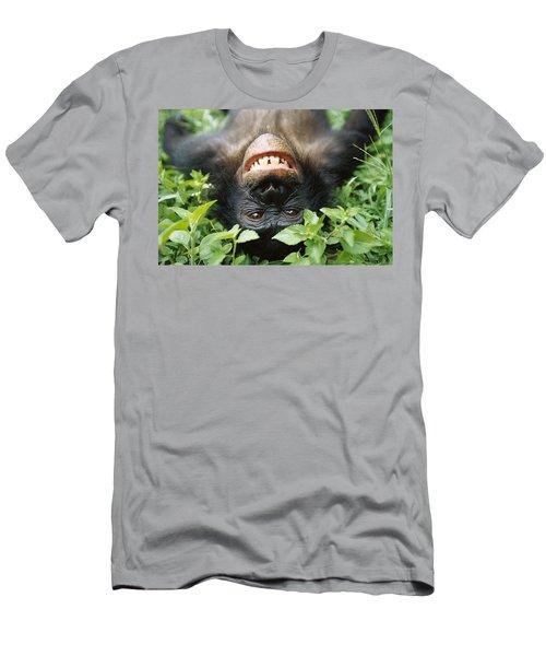 Bonobo Smiling Men's T-Shirt (Athletic Fit)