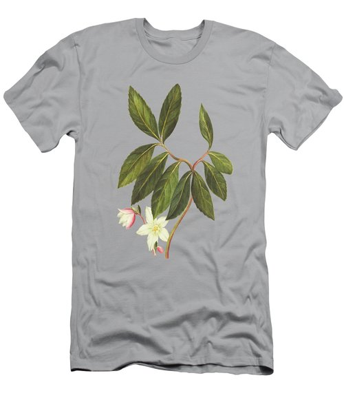 Branch Of Veratrum Album With Flower By Cornelis Markee 1763 Men's T-Shirt (Athletic Fit)