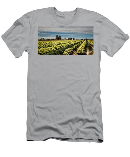 Broccoli Seed Men's T-Shirt (Slim Fit) by Robert Bales