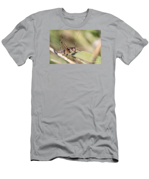Bush Cricket Men's T-Shirt (Slim Fit) by Jivko Nakev