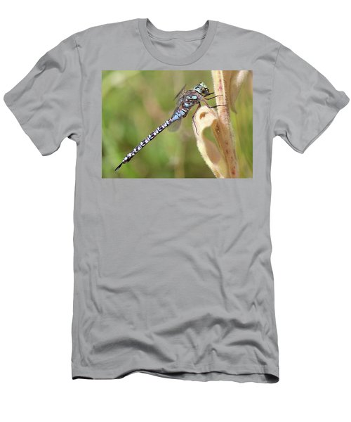 Canada Darner Men's T-Shirt (Athletic Fit)