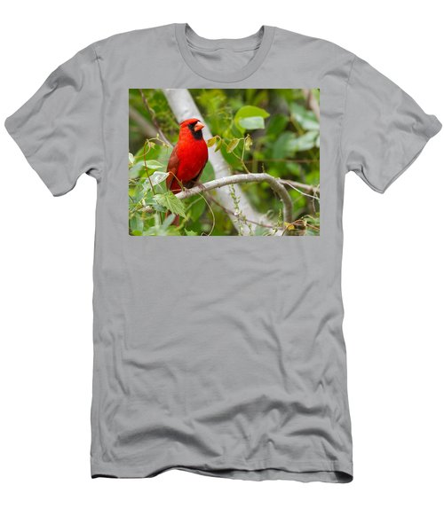 Cardinal 147 Men's T-Shirt (Athletic Fit)