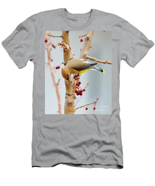 Cedar Waxwing 2 Men's T-Shirt (Athletic Fit)