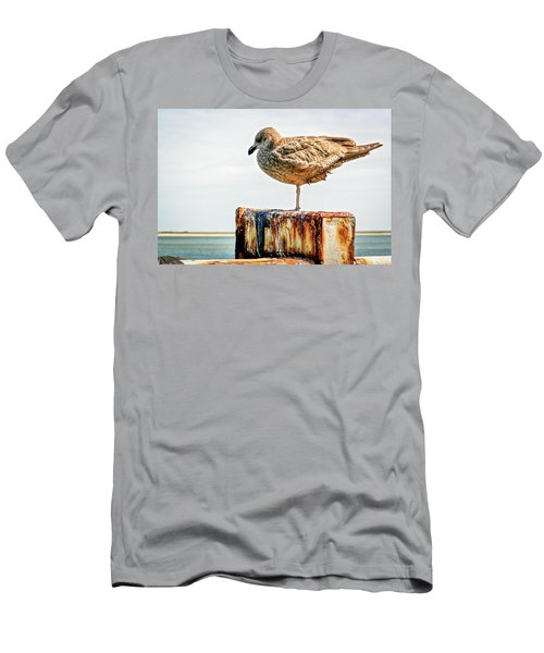 Chatham Gull Men's T-Shirt (Athletic Fit)